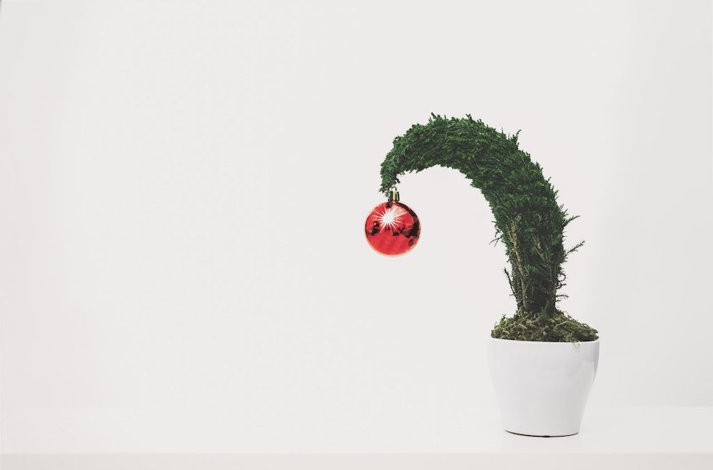 8 Unique Living Green Gifts For Plant-Loving Amateurs